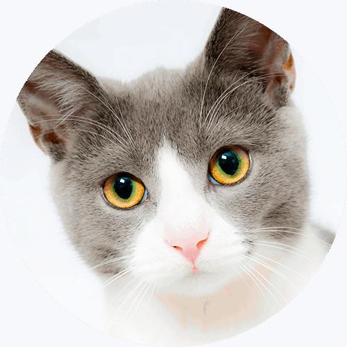Tierhalter Katze Hund